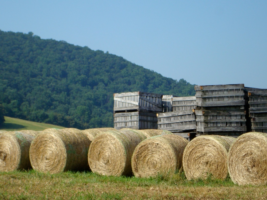 Apples, Hay, and Mountain Views