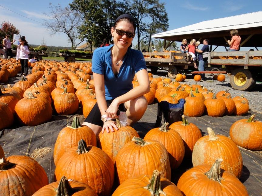 Homestead Farm and pumpkins