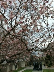 Rodin amid the cherry blossoms = cheesy!