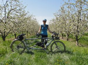 MG and apple trees