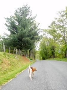 Dog-Bluffer 2