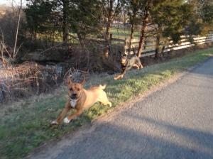 Dog-Runner 3