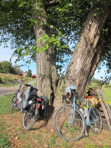 Bikes At Rest in Butler's Orchard
