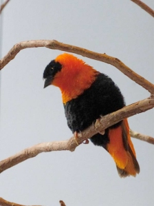 pittsburgh-national-aviary-orange-n-black