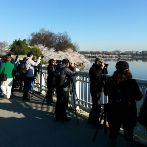 Photographers at the Tidal Basin