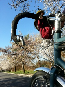 Hains Point, cherry blossoms, and the Surly LHT