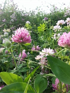 HBR2014 Wildflowers