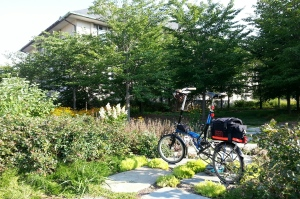 Morning ride to American University. Many nice plants here.