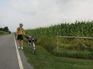 Felkerino and cornfield