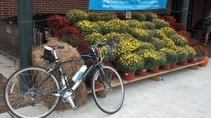 Illustration 1: My bike by the pretty flowers