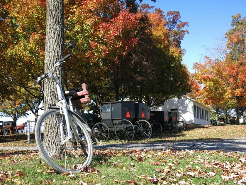 Buggies and bike in Harrisonburg