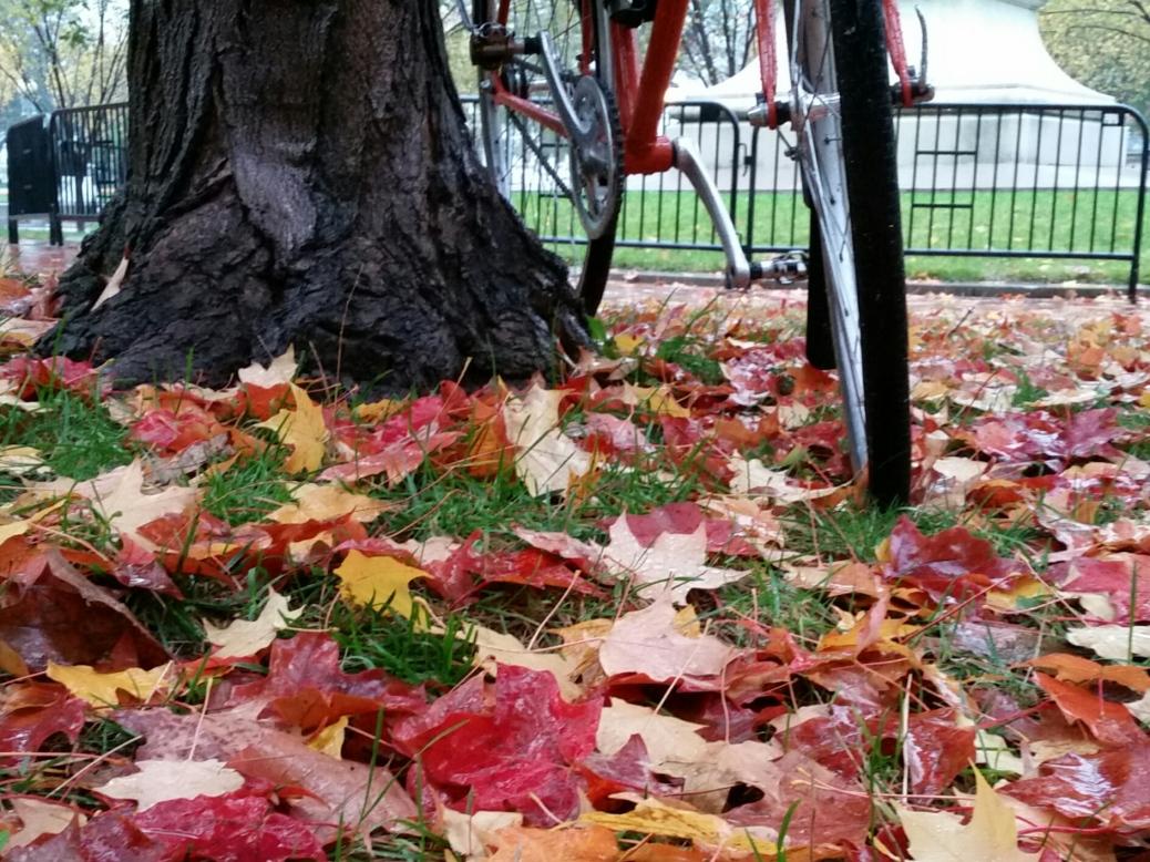 Rainy day Quickbeam in leaves