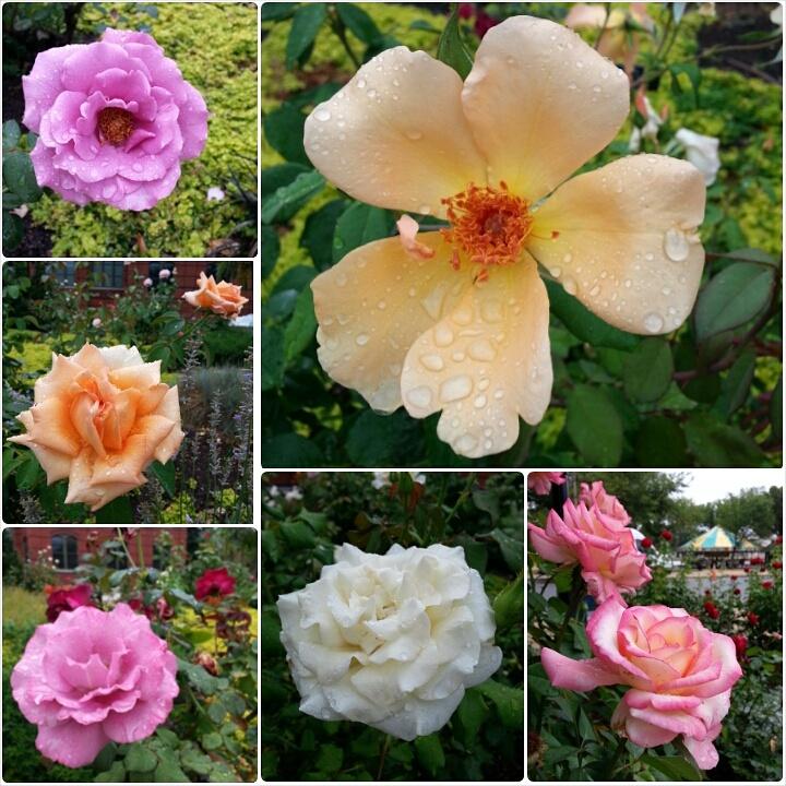 August morning run commute flower photos