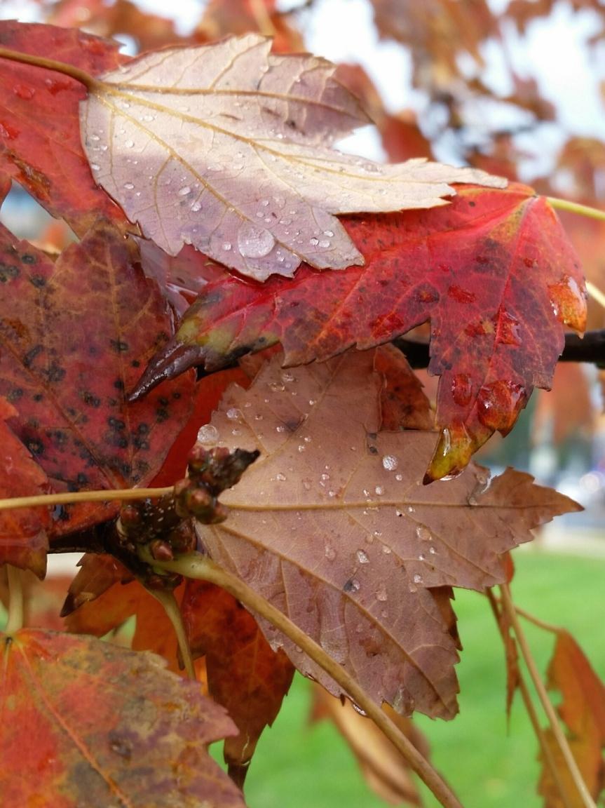 November leaves on the morning run