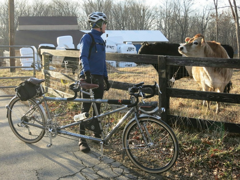 Obligatory Cow Photo with Felkerino and tandem