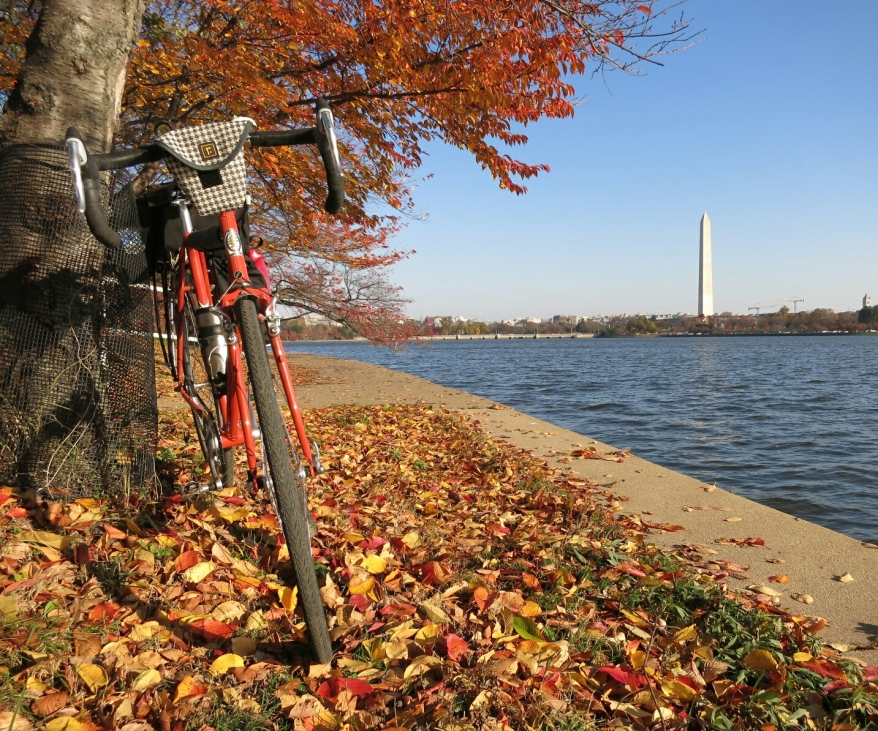 November-Quickbeam at the Tidal Basin