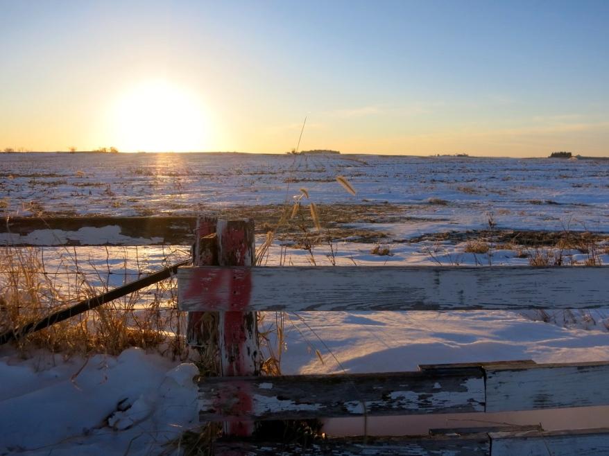 Iowa cornfield sunset