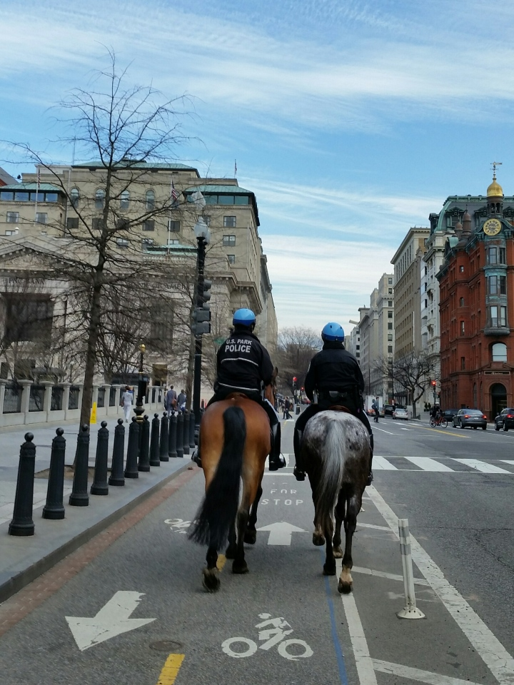 Tuesday 15th Street Cycletrack and These Horses