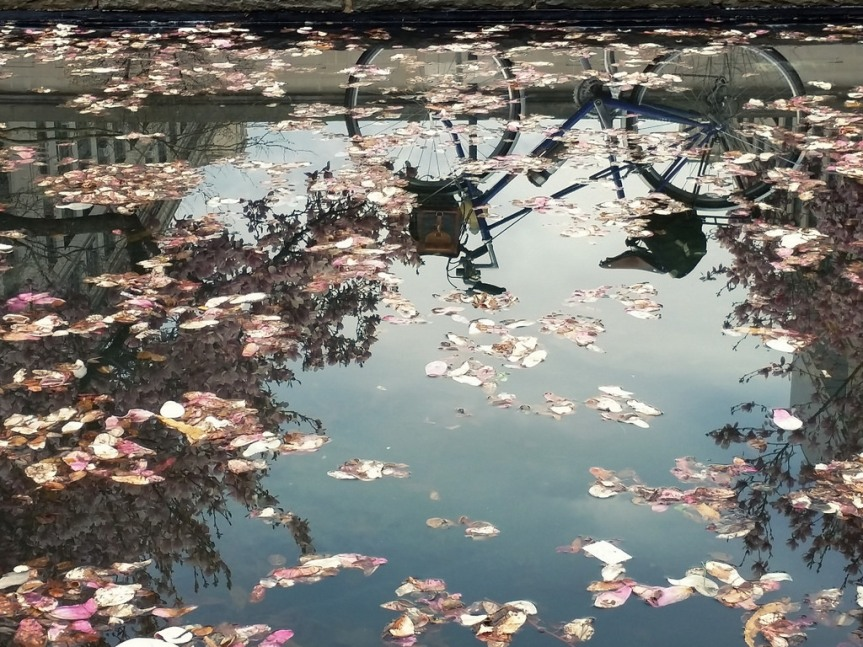Magnolia reflection