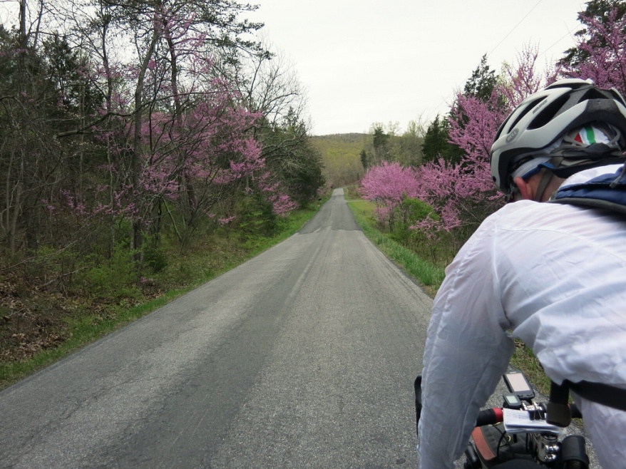Redbud on Fort Valley Road with Felkerino