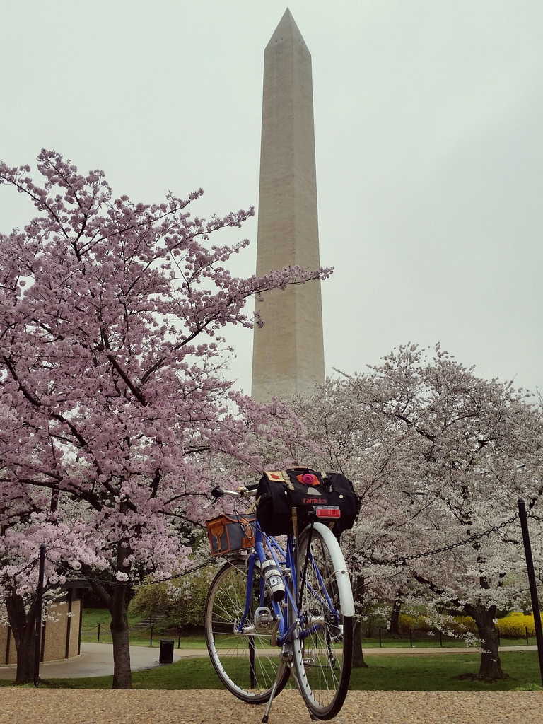 Monument mixte and blossoms