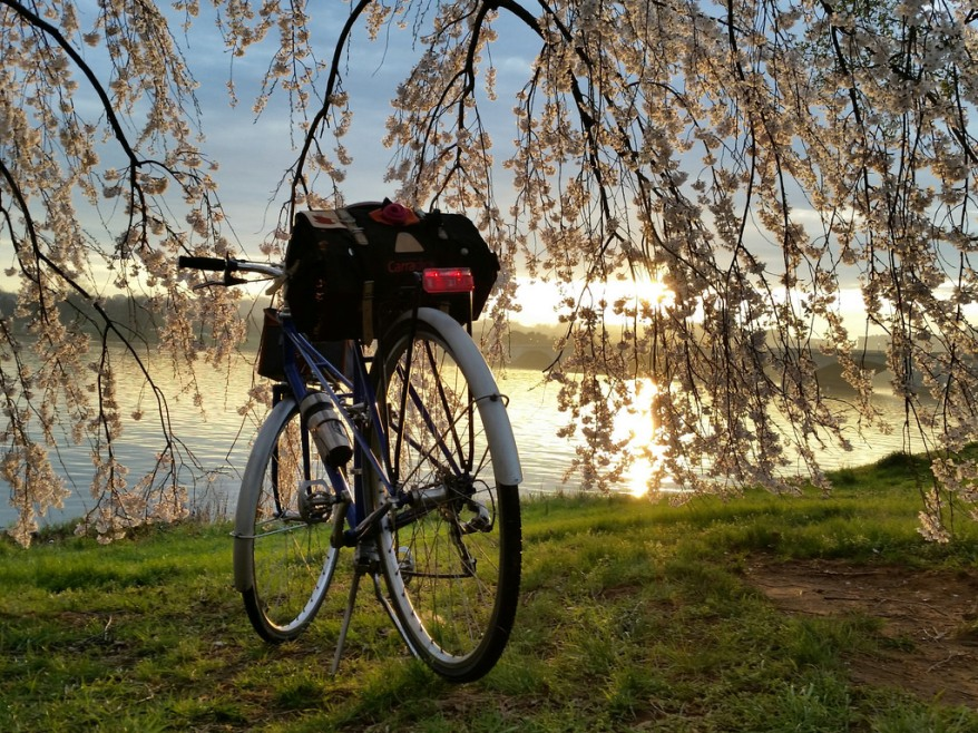 Sunset mixte by Potomac and blossoms