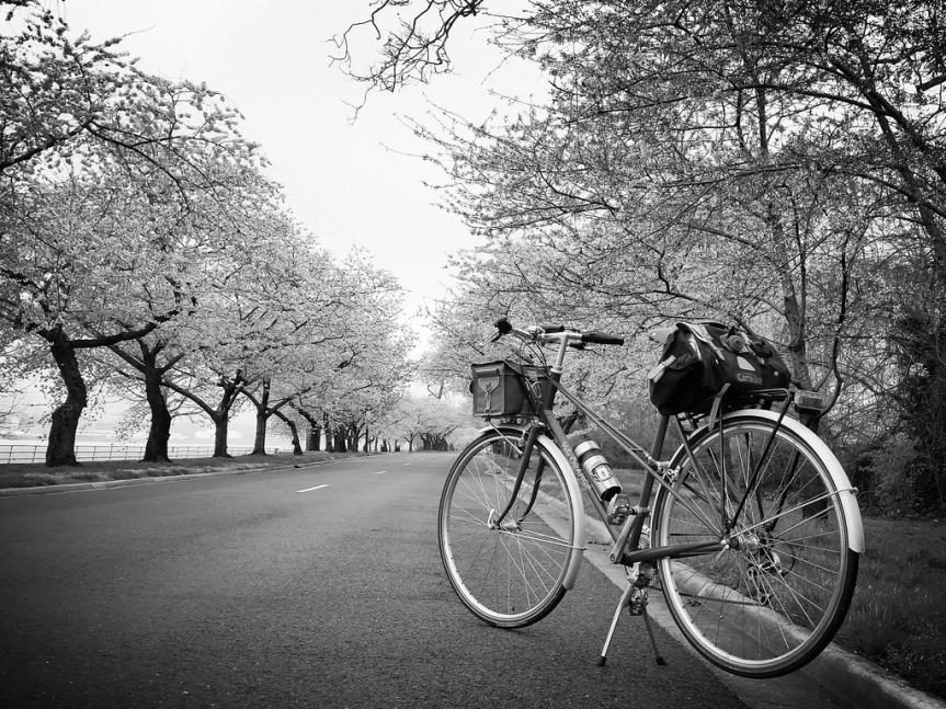 Mixte and blossoms on Hains Point
