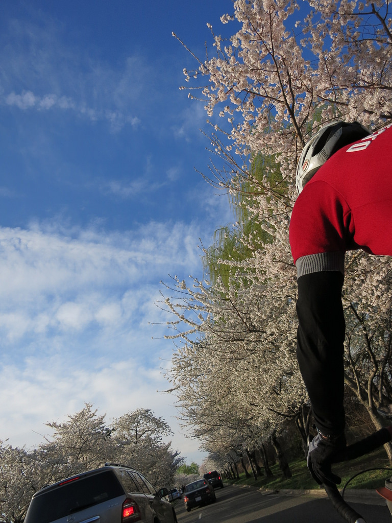 Hains Point and blossoms