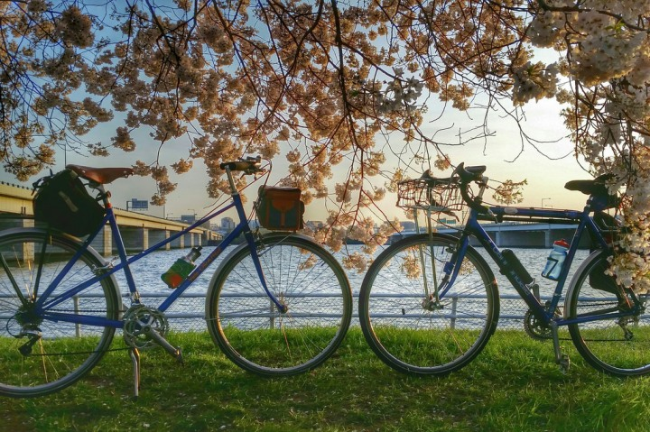 Day 13: Bikes and blossoms at sunset