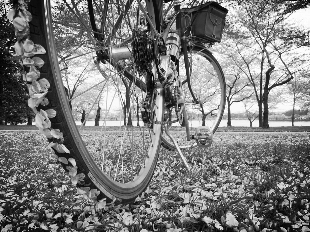 Black and white mixte bike with petals