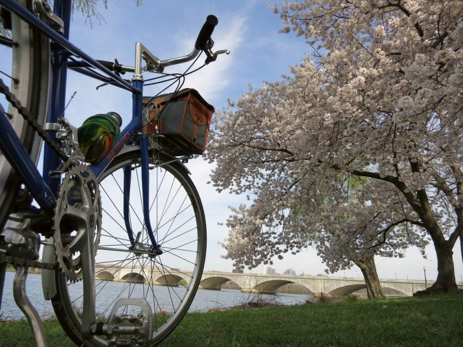 Blossoms with mixte