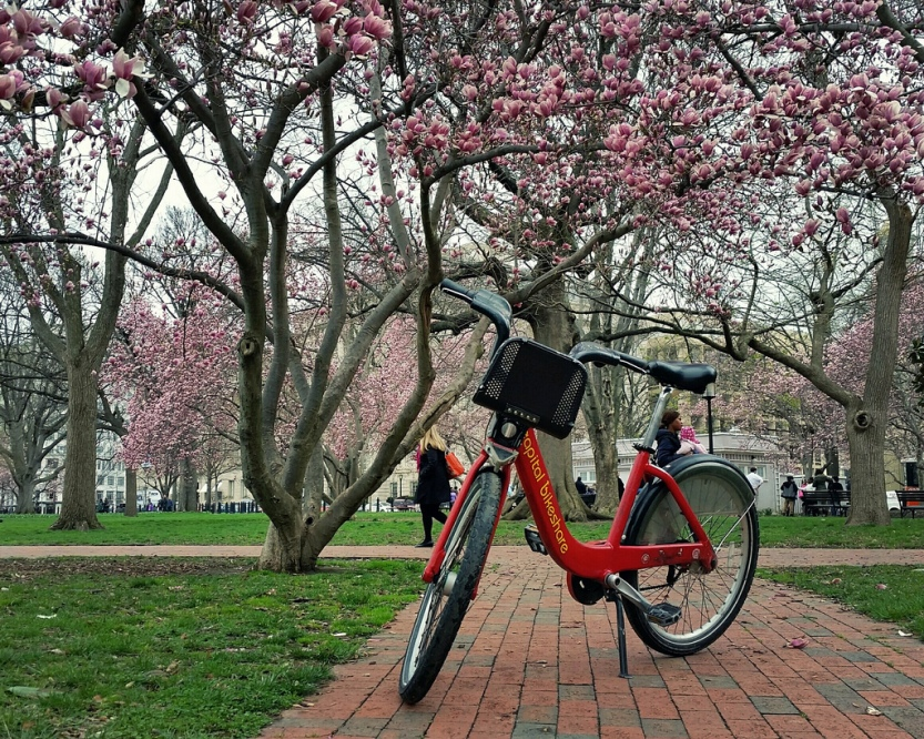Day 8 Capital Bikeshare