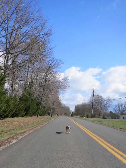 We managed to outrun this speedy dog.