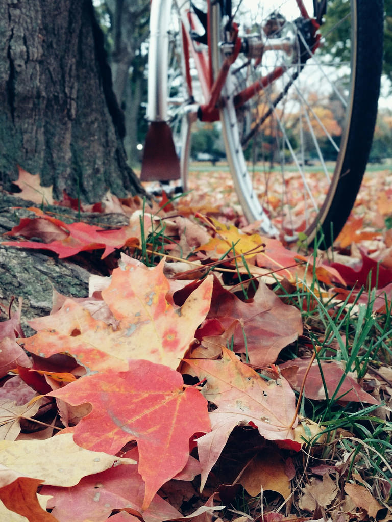 Fall leaves and Quickbeam
