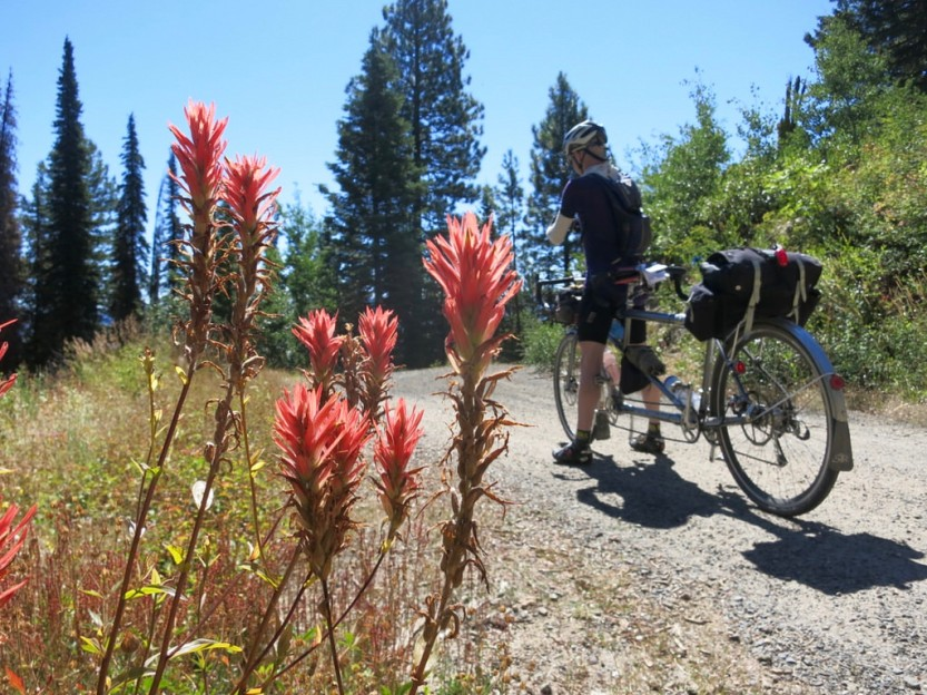Day 10: Indian Paintbrush on the Sand Gravel