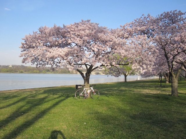 Exu at the Cherry Blossoms. Photo credit Liz MacGregor