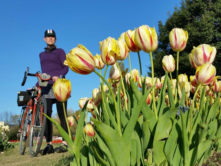 Tulip and Quickbeam