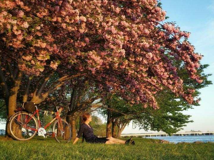 Quickbeam and me - Golden hour under the kwanzan cherry