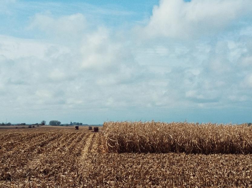 Harvest in Iowa